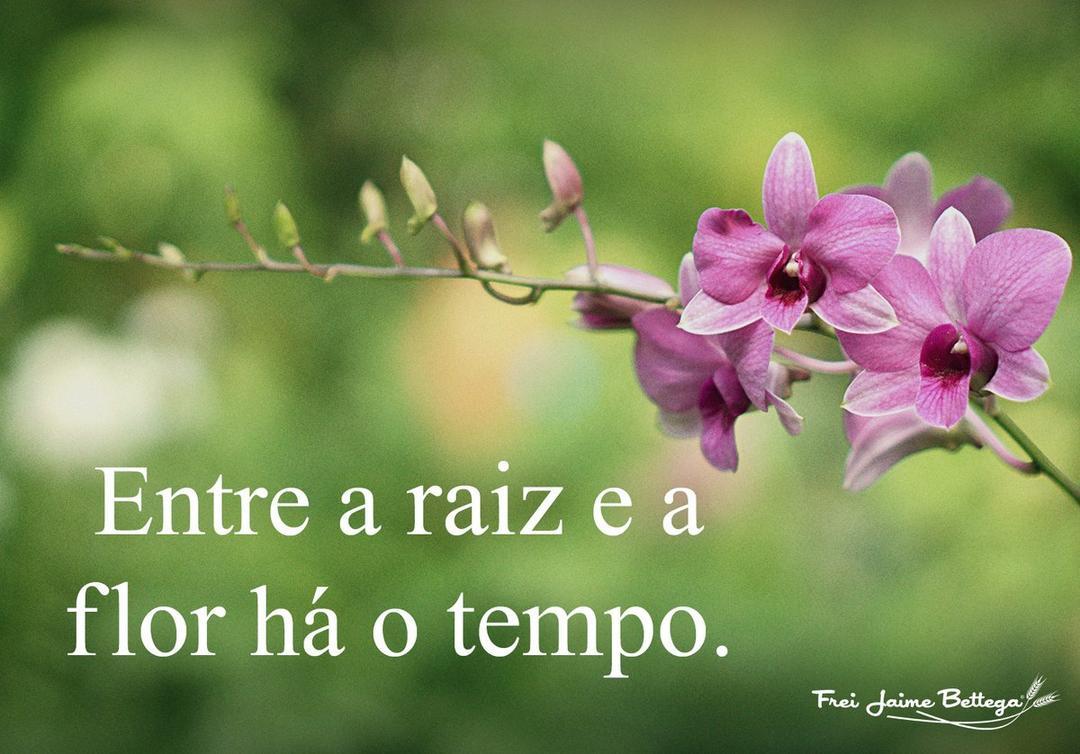 DA RAIZ A FLOR, UMA JORNADA DE CURA