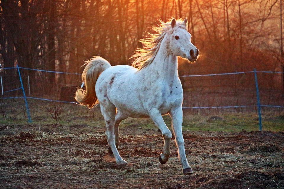 Por que constelar com cavalos?