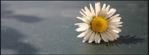 Você sabe se colocar numa postura de humildade diante da vida?