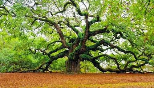 A vida nova está armazenada na raiz