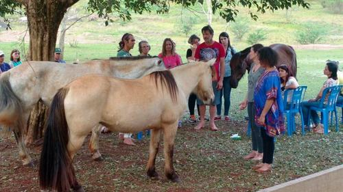 Constelação com cavalos: O resgate do passado e a ponte ao futuro