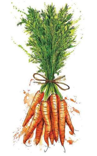 Vivendo sistemicamente de cenoura em cenoura!