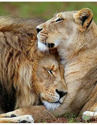 Relacionamento Amor e Ódio